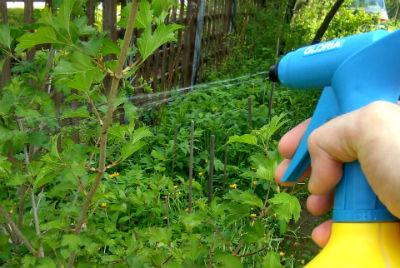 Опрыскивание растений гомеопатическими лекарствами