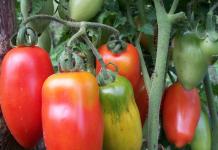 Природное земледелие в Белоруссии