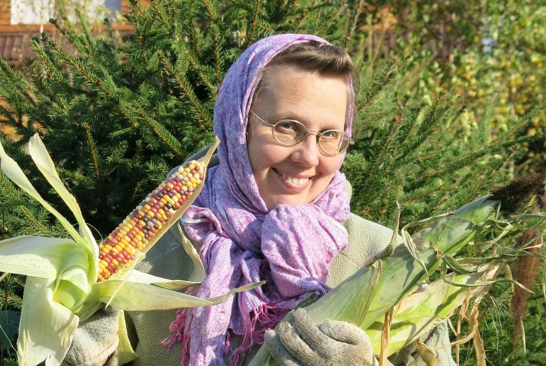 Самая поздняя индейская кукуруза. Выращивание кукурузы - урожай.