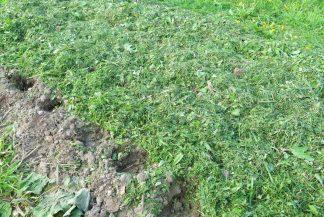 Мульчирование свежескошенной травой