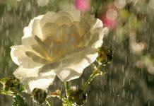 Дождливая погода этим лето