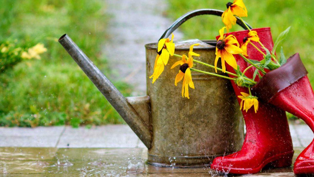Дождливая погода. Помощь растениям гомеопатией