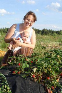 Выращивание земляники на грядках, замульчированных чёрным спанбондом