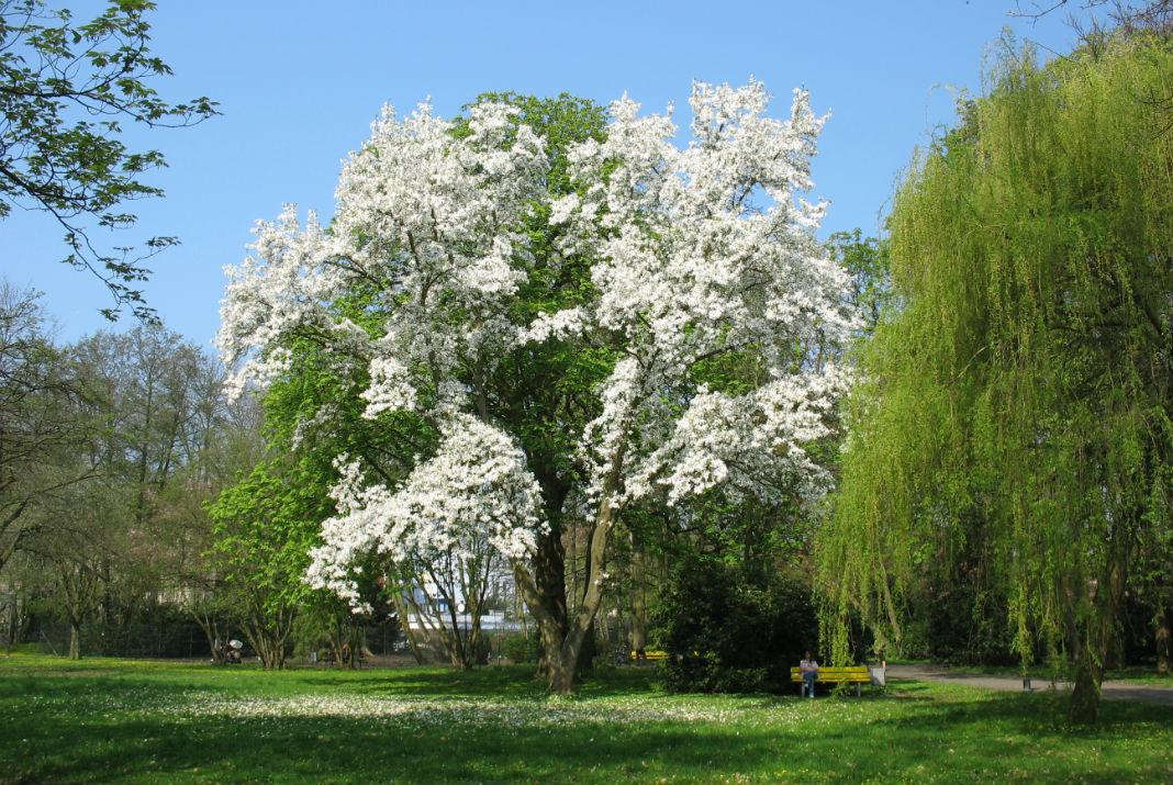 Растительность в Германии