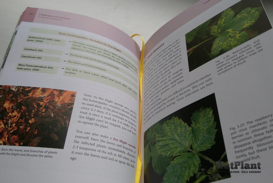 """Кристиане Мауте """"Гомеопатия для растений"""". Фото из главы о заболеваниях растений"""