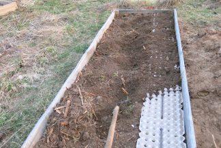 Как правильно сажать горох в открытый грунт: засыпаем ячейки с горохом землёй