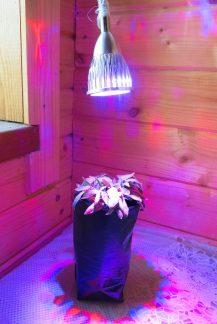 Светодиодная фито-лампа